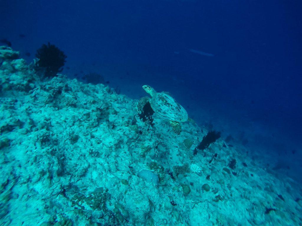 Tortugas snorkel - Viajar barato a Maldivas