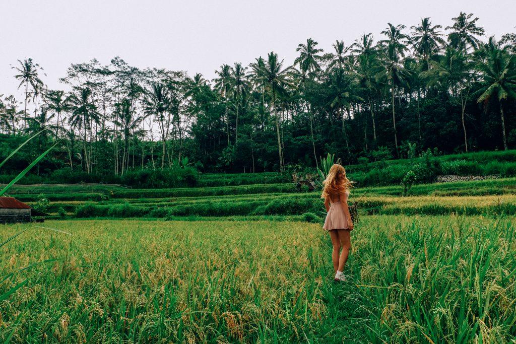 Norte de Bali, arrozales